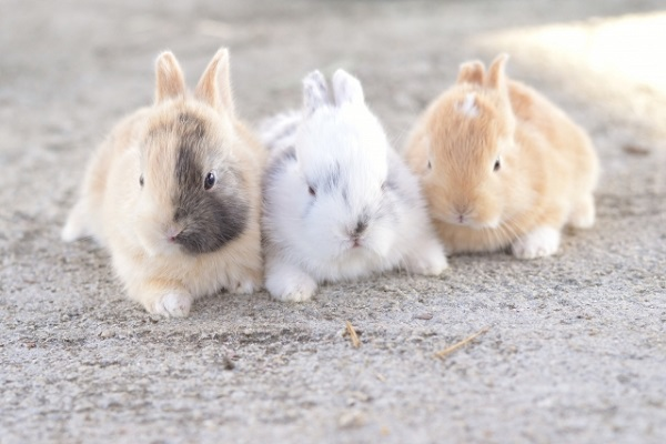 rabbit-breeding4