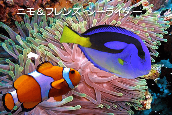 nemo-&-Friends-sea-rider1