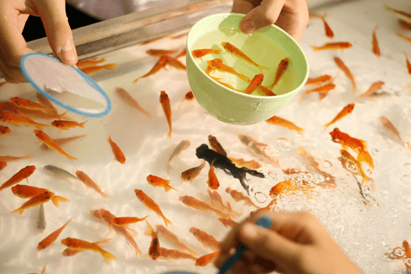 goldfish-scooping-goldfish8